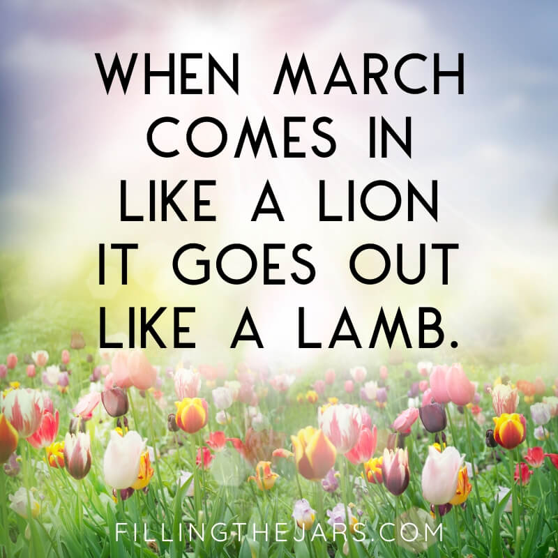 march comes in like a lion text on tulip field and sunshine background