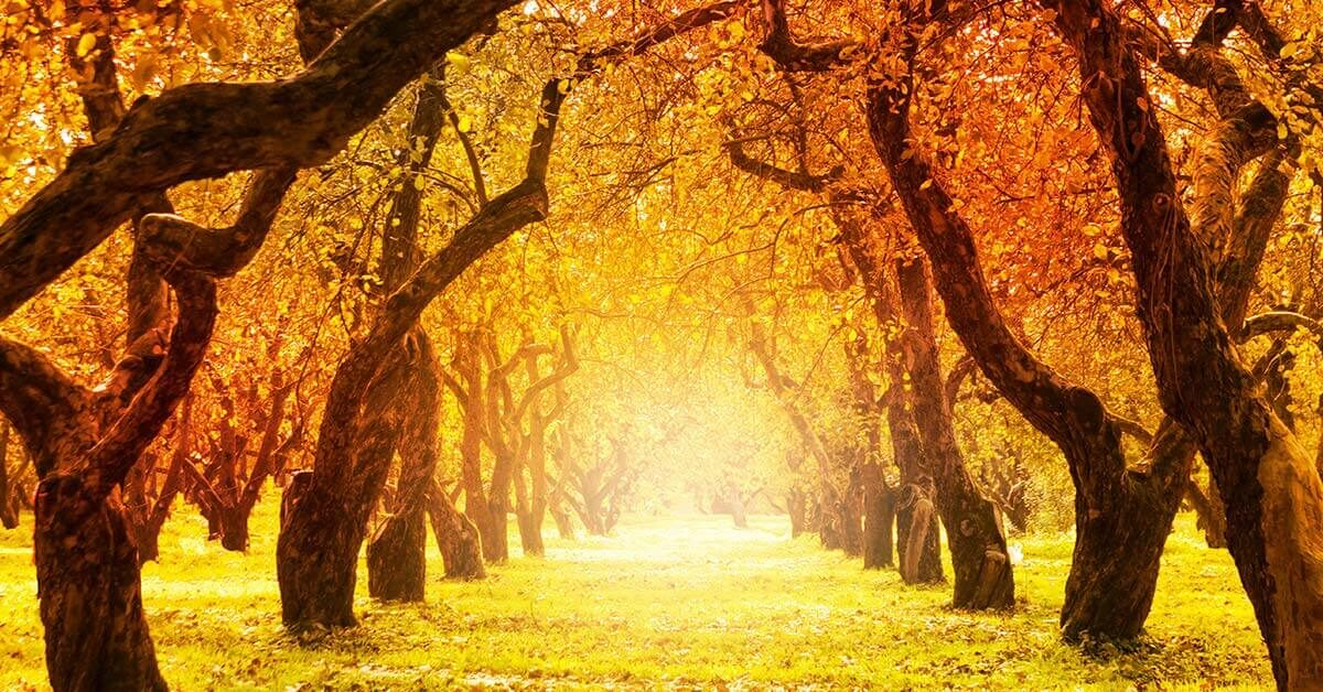 sunlit autumn orchard with beautiful orange and yellow leaves