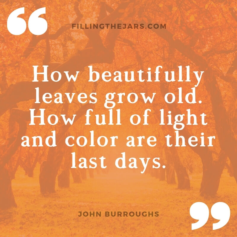 John Burroughs old leaves quote on orange background over autumn orchard image