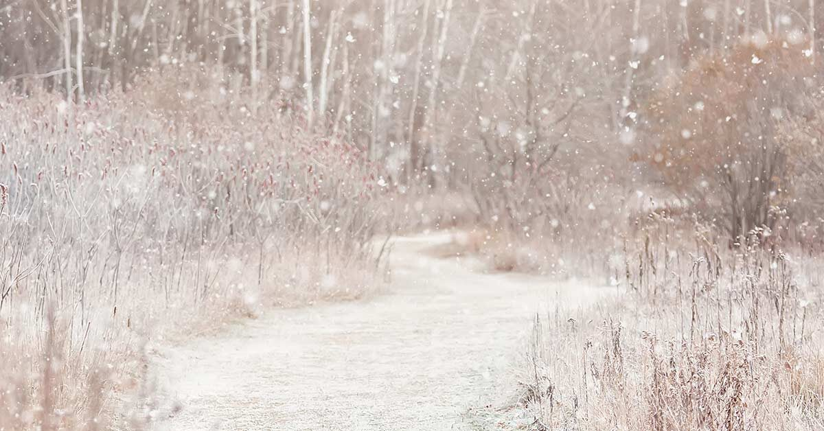 outdoor winter scene with snowy path and snow falling