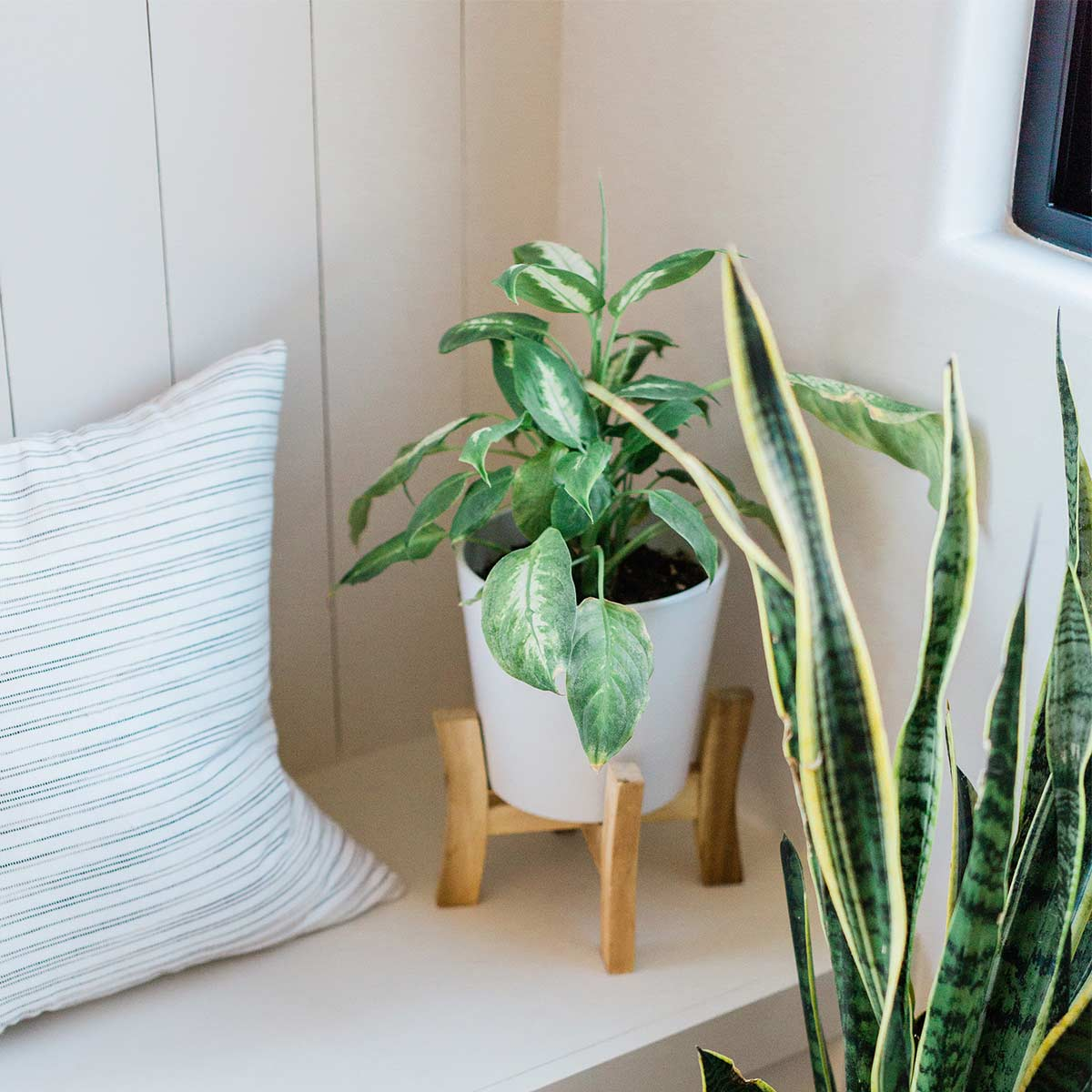 plants and striped pillow on simple and clutter-free white bench