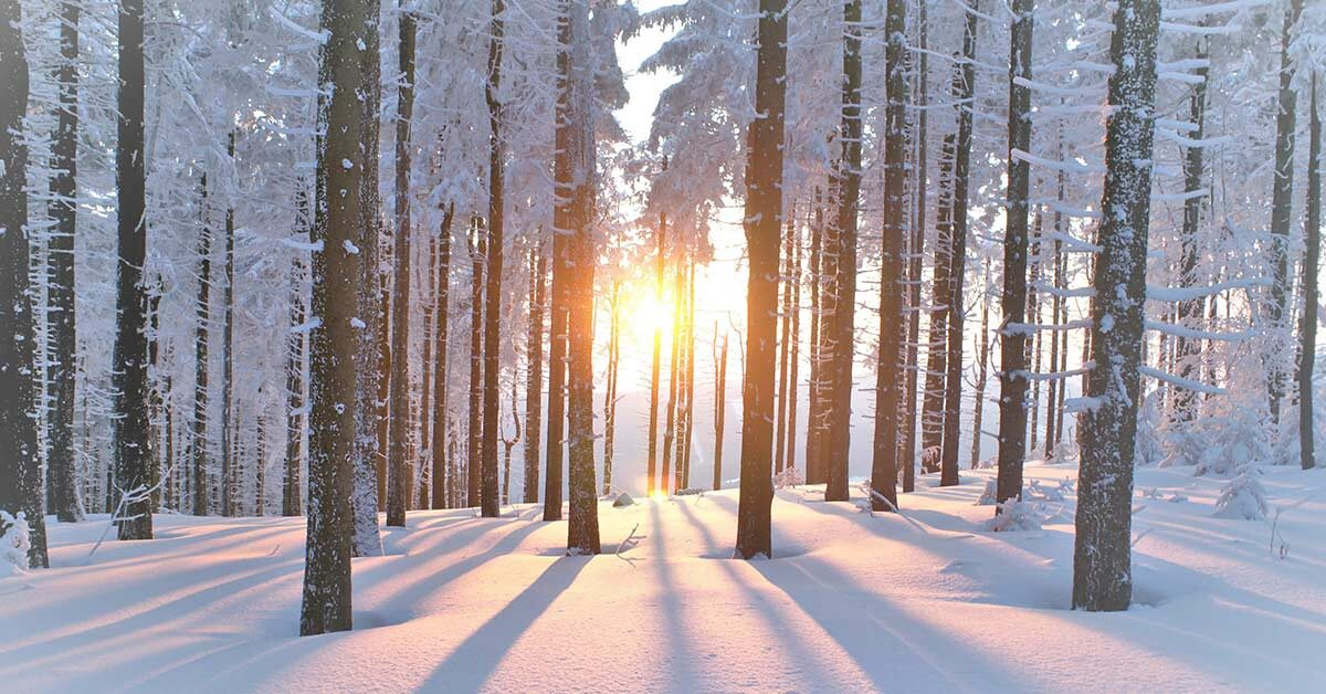 Sun shining with long shadows through snowy woods and trees.