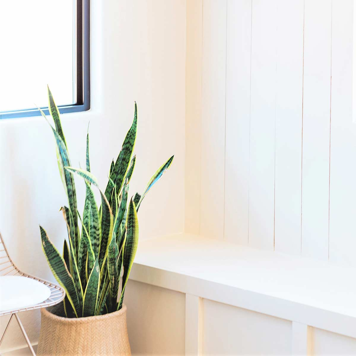 Tall plant in basket next to clutter free white bench in white room.