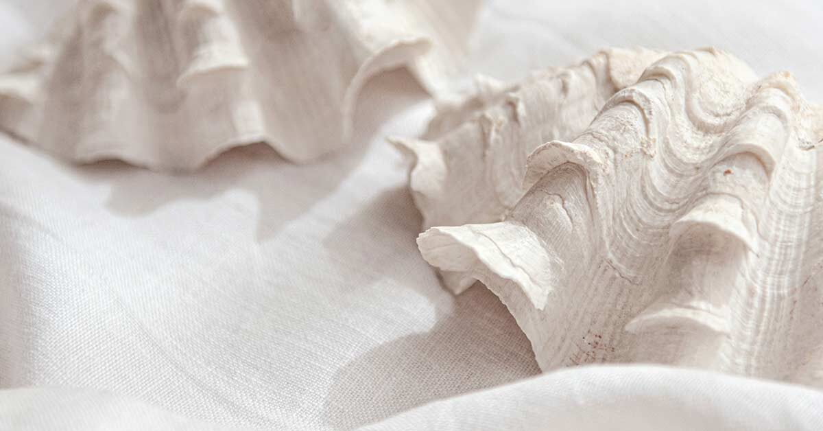 Seashells on white linen cloth arrangement to inspire a summer slow down.