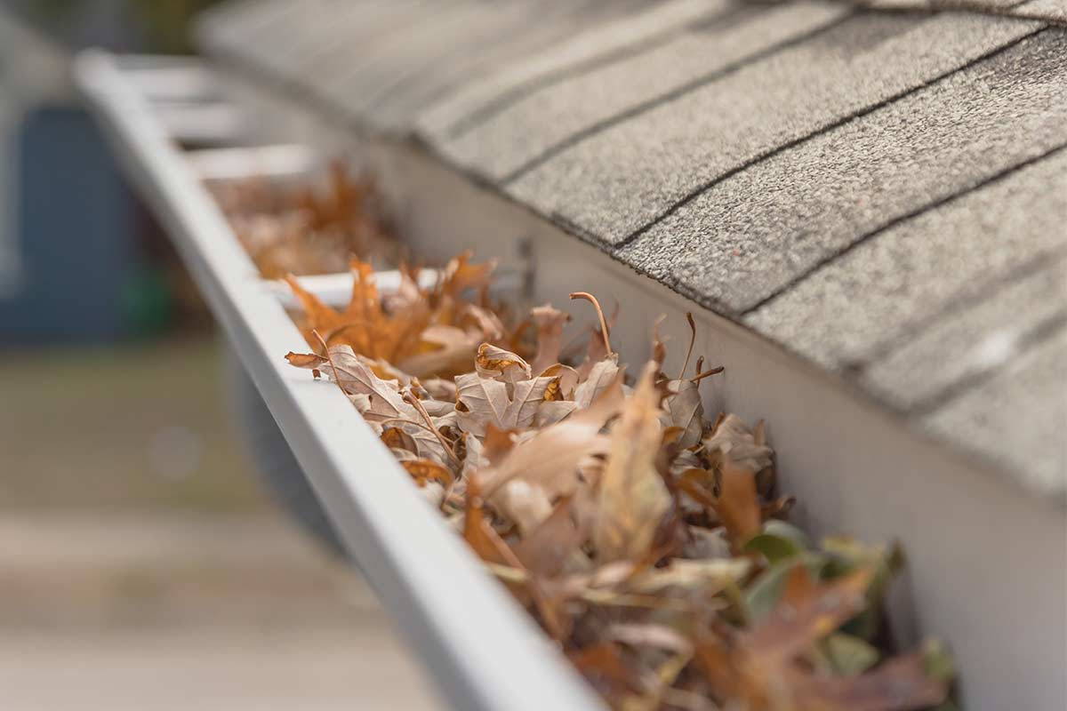 Fall leaves in house gutter ready for autumn cleaning.